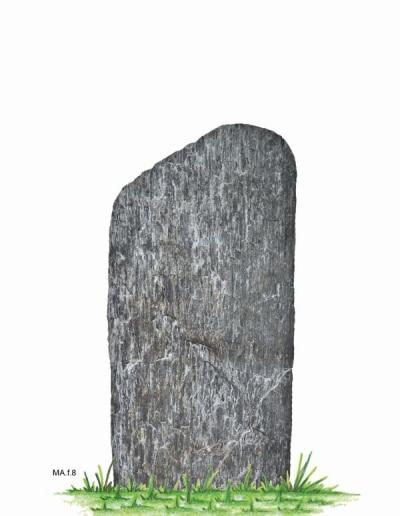 MA.f.8.W.104x50